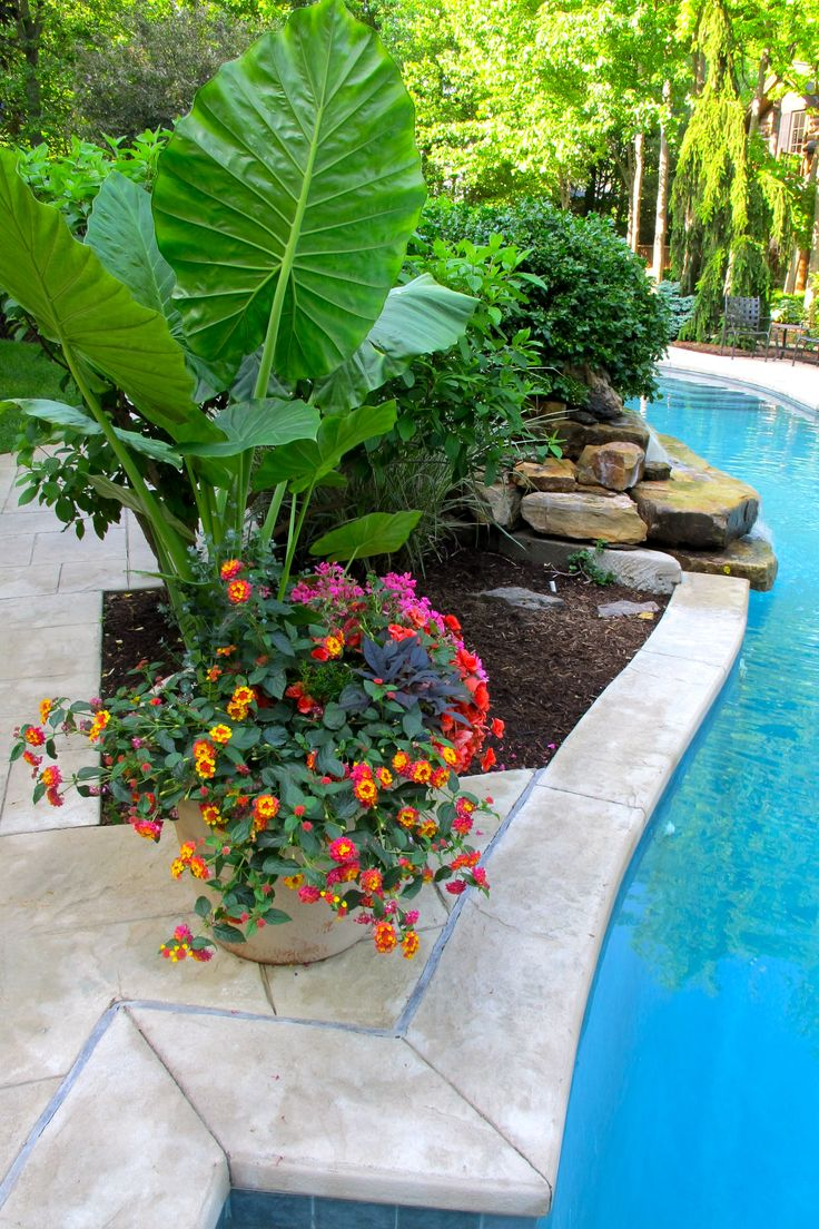 characteristics of good poolside plants - Garden Ideas Around Swimming Pools